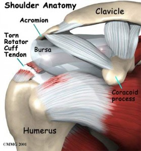 Rotator Cuff Injury Amp Tear Treatment Amp Symptoms
